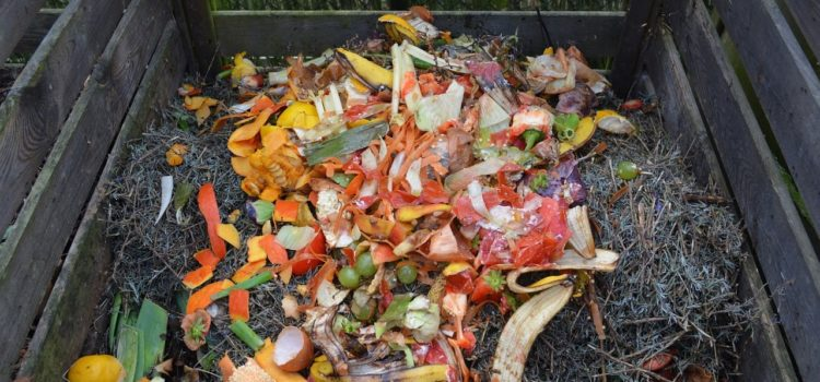 HOW CAN ORGANIC WASTE BE COLLECTED?